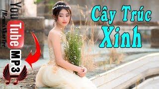 Liên Khúc Cây Trúc Xinh - Nhạc Sống Thôn Quê Vùng Cao