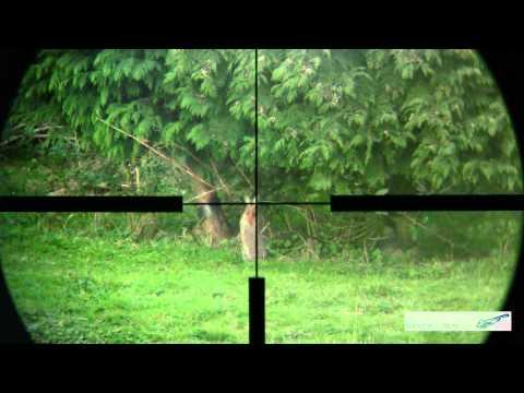Rabbit Shooting 4 With A 17hmr Rifle 17 Grain Hornady V Max Bullets