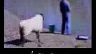 كاميرا خفيه-مواقف وطرائف -اجمد خروف-الاسماعيليه-usa-بنات-sex