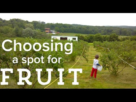 How to choose a location for planting fruit trees and bushes on the homestead