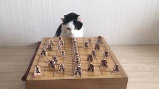 Cat plays dominoes with shogi game pieces