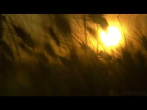 Черный Лукич - Солнышко