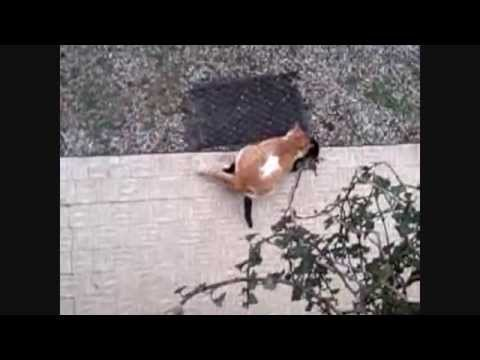Animal Sex Between Two Cats video
