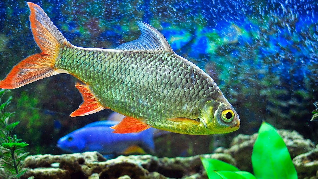 How to Acclimate Your Fish to Your Aquarium Floating Method How to Acclimate Your Fish to Your Aquarium Floating Method new images