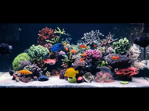 150 Gallon Reef Tank Build