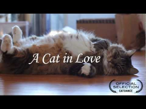 A Cat In Love