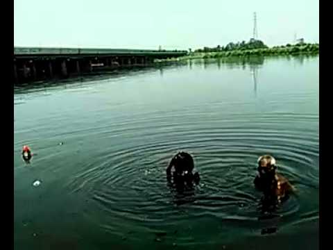 OF DANGER DELHI YAMUNA ! YFF NEWS 8-9-2014