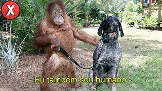 Este orangotango falou! E você NÃO vai acreditar no que ele revelou sobre si mesmo