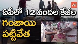 Huge Ganja Smuggling Busted in AP | Police Seized 1200 Kgs Ganja in AP