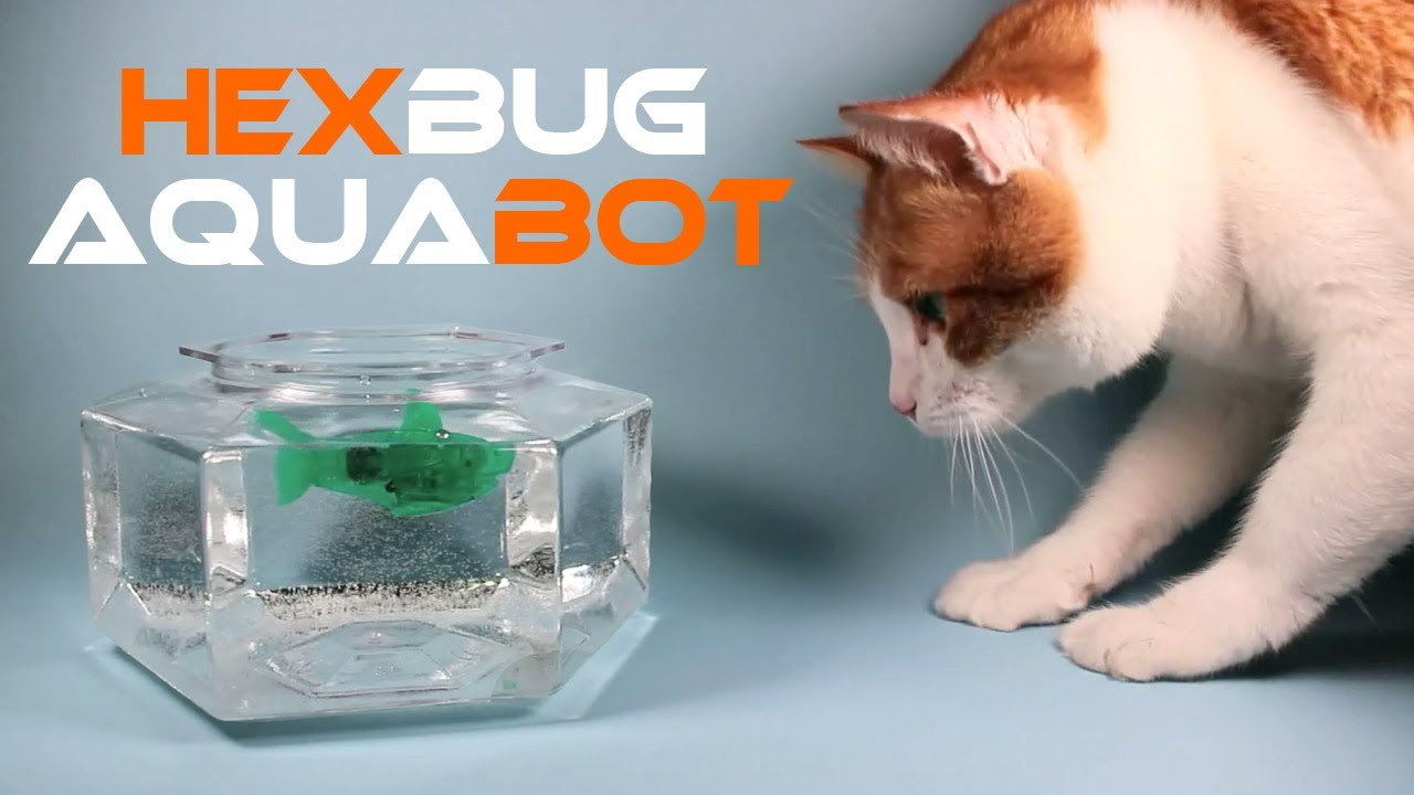 Hexbug aquabot smart fish technology review youtube for Fred meyer fishing license