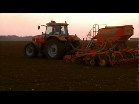 Drilling Peas with the MF 7499 + Vaderstad Rapid
