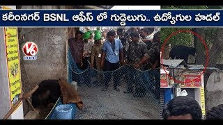 Wild Bear Hulchul In Karimnagar, Caught By Rescue Team