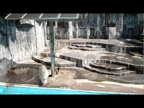 浜松市動物園のキロル君のお庭