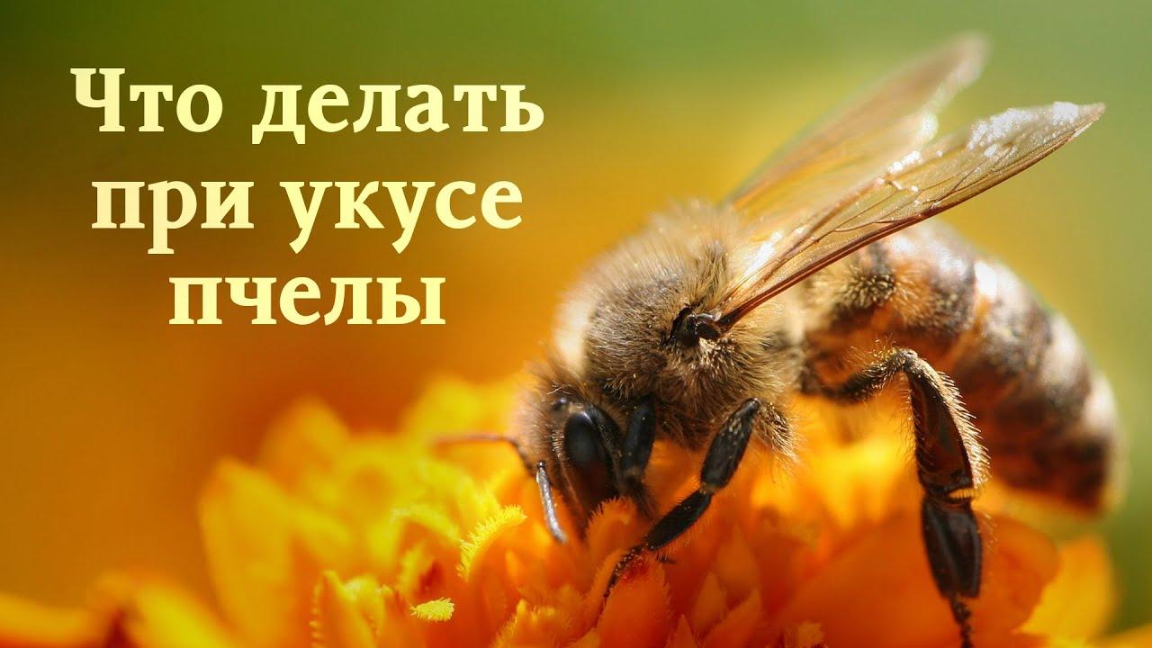 Чем и как лечить укус осы в домашних условиях? 19