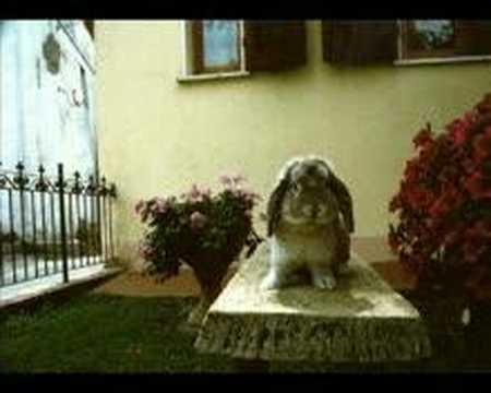 Poldino's Life – Cool Rabbit