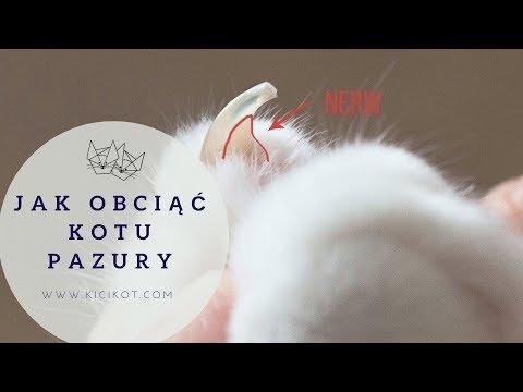 Kocie Porady - Jak Obciąć Pazury Kotu