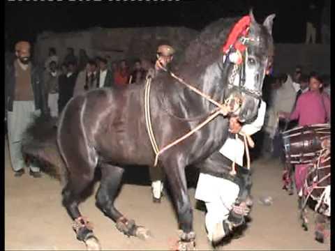 Dancing horse wedding