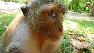 Dana happy to see her baby good healthy but she need sleep Youlike monkey