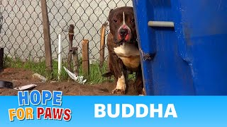 Rescuing a Pit Bull who just wanted to be loved.  A MUST SEE!