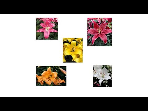 Moss Mountain Farm 10piece Lilies of the Field Collection