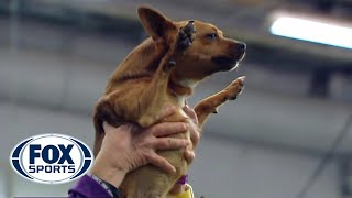 Best of the 2018 Masters Agility Championships   WESTMINSTER DOG SHOW (2018)   FOX SPORTS