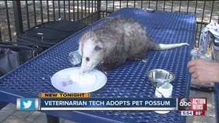 Pet possum is changing perceptions in Citrus County