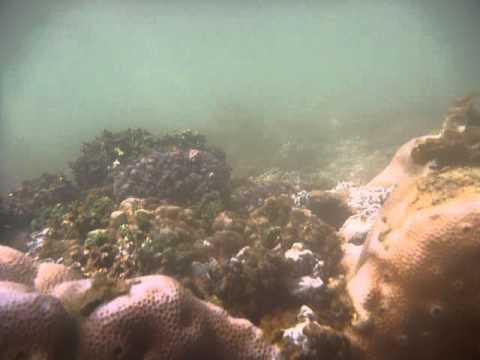 Sri Lanka,ශ්රී ලංකා,Ceylon,Coral Reef (14)