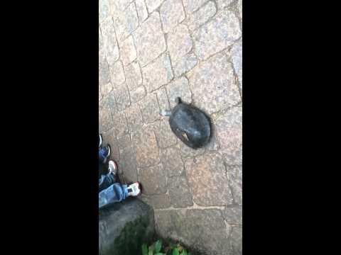 Turtle Adventures!