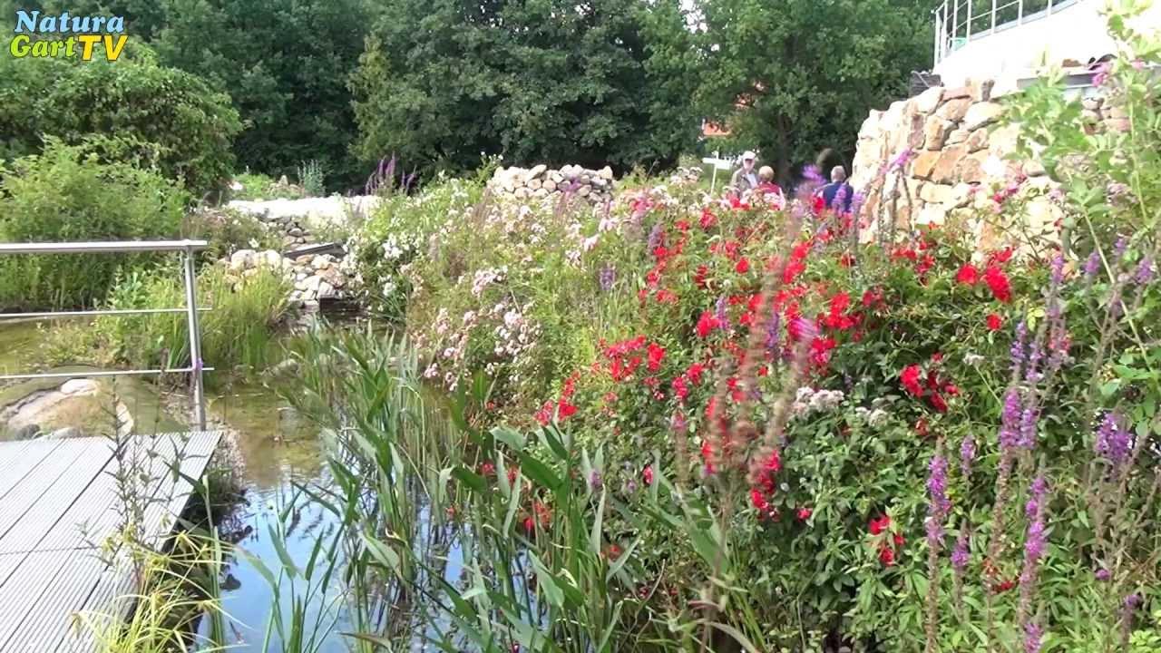 Biologische Teichreinigung Im Schwimmteich Und Fischteich