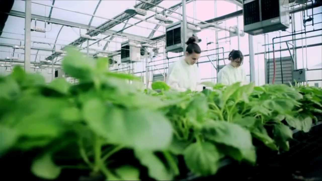 Six reasons why you should study food science - Science ...