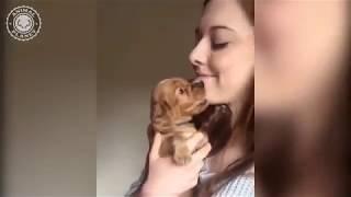 Cute & Funny Dog Vines (2019)