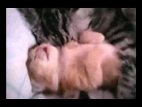 Animal hug animated gif