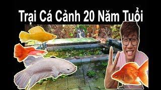 Vlog 103: Thăm Quan Trại Cá Cảnh Ở  Ngọc Lâm Tân Phú Đồng Nai I Ryan Nguyen_The Fish Lover I