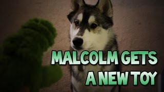 Malcolm Gets A New Toy! (Random Malcolm Vlog 2)
