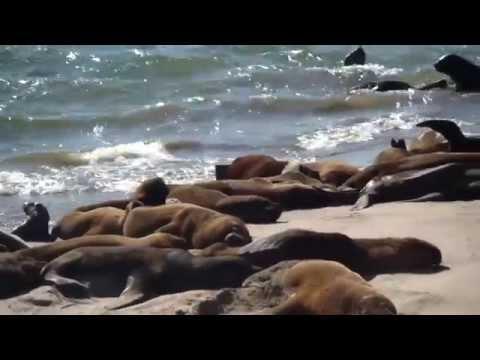 Puerto de Mar del Plata - Reserva de Lobos Marinos