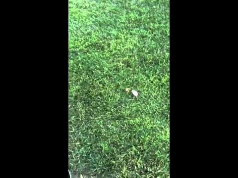 Dead snake found in Beattie middle school