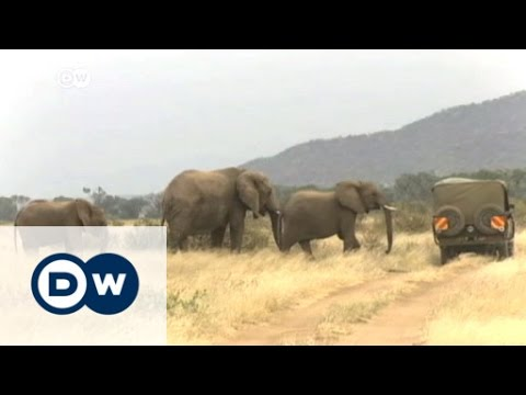 African leaders gather for Giants Club elephant summit | DW News
