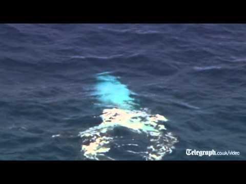 Albino humpback whale spotted off Australian coast