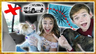 Letting My Dogs Decide Where We Go For Vacation | We Are The Davises
