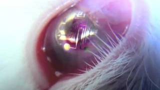 Bionic Contact Lenses  WWW.GOODNEWS.WS