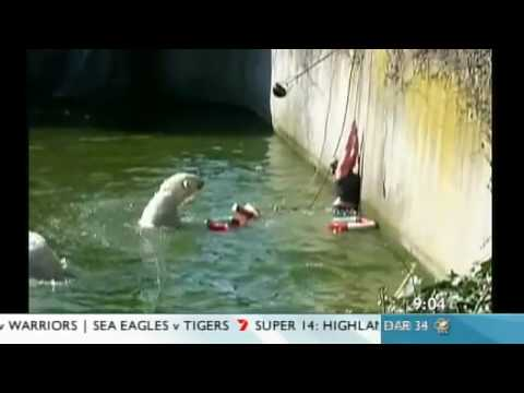 Polar Bear Attack! Berlin Woman Falls Into Zoo Enclosure video