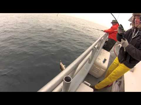 Cod Fishing Island Current 1/28/13