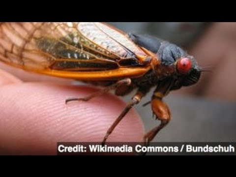 U.N. Suggests Eating Bugs to Fight World Hunger