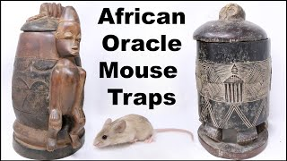 Catching Mice With African Oracle Mouse Traps. Mousetrap Monday