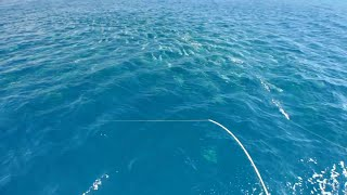 TOPWATER YELLOWTAIL KINGFISH Part 3 - YouFishTV
