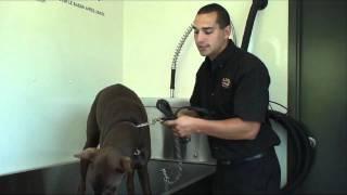 Notre lave-chien - Lub Express
