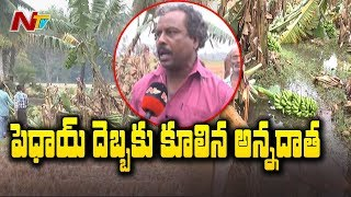 Banana Trees Damaged Due to Phethai Cyclone In Andhra Pradesh | NTV