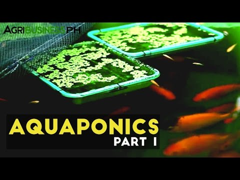 Aquaponics In The Philippines  Agribusiness Season 1 Episode 4 Part 1