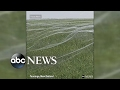 Cobwebs cover soccer field in New Zealand