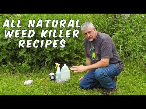 Safe Liquid Lawn Weed Killer And Control